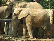090912  s  elephant.jpg