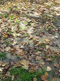 091012  s  leaves.jpg