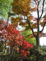 091202  s Autumn2.jpg