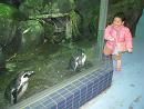100119  s  penguin.jpg