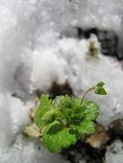 100209  s  snow.jpg
