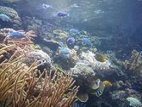 100520  s  underwater world1.jpg