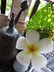 100609  ss  flower.jpg