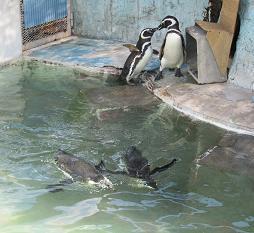 1104  s  penguin1.jpg