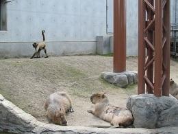110730  s  monkey.jpg