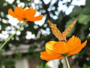 �@100908  s  butterfly1.jpg