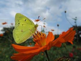 �A100908  s  butterfly.jpg