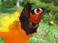 �C100908  s  butterfly3.jpg