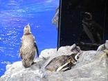 koiblog 120703  s  aquarium 4.jpg