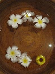 081227-31 s 水の花  341.jpg