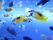 100119  s  aquarium.jpg