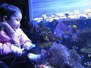 100119  s  aquarium2.jpg