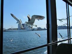 100630  s  matsushima seagull.jpg