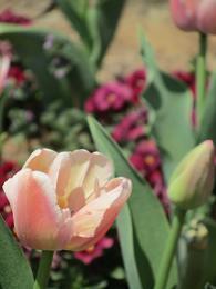 110420  s  flower.jpg