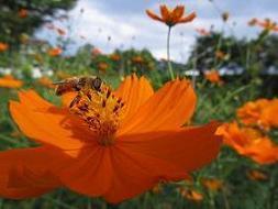 �B100908  s  bee1.jpg