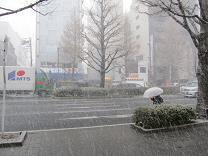 �Hkoiblog 110330 s snowstorm.jpg